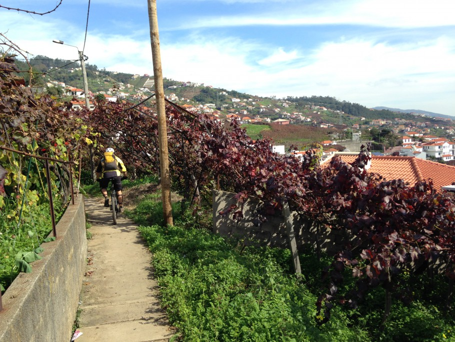 An urban levada on the way to Funchal